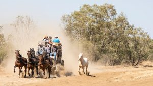 Outback Pioneers Cobb and Co Stagecoach gallop