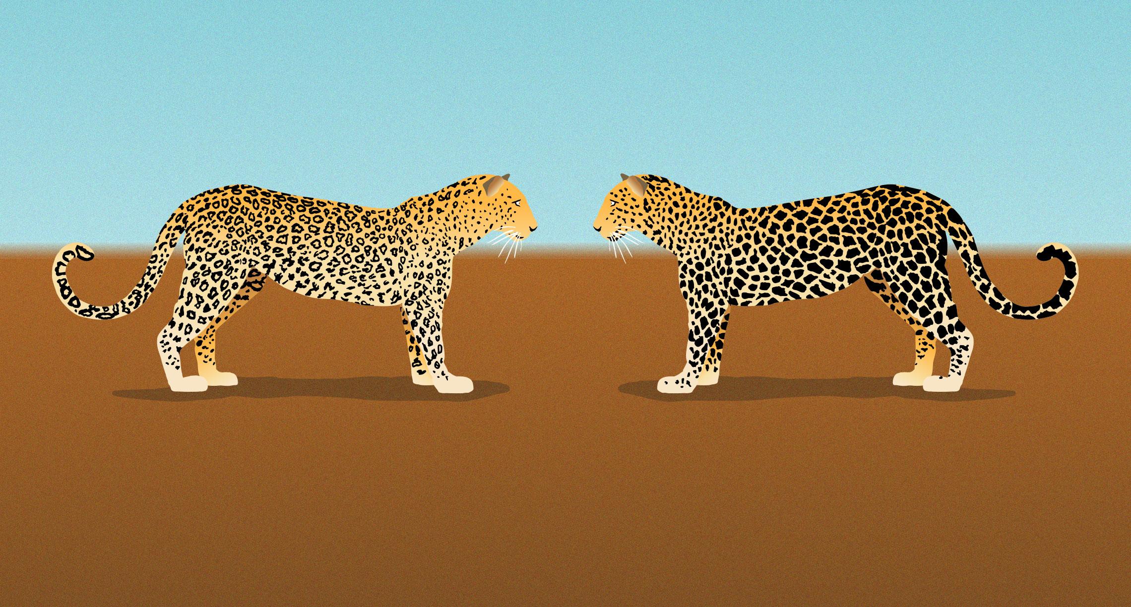 Leopard changing it's spots illustration