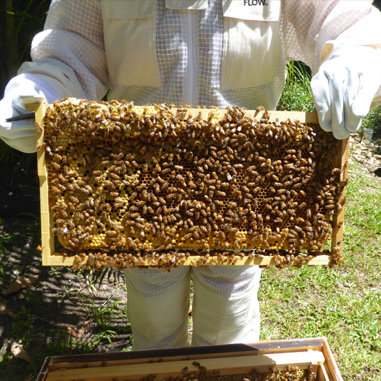 Julia holding a frame from her Flow Hive