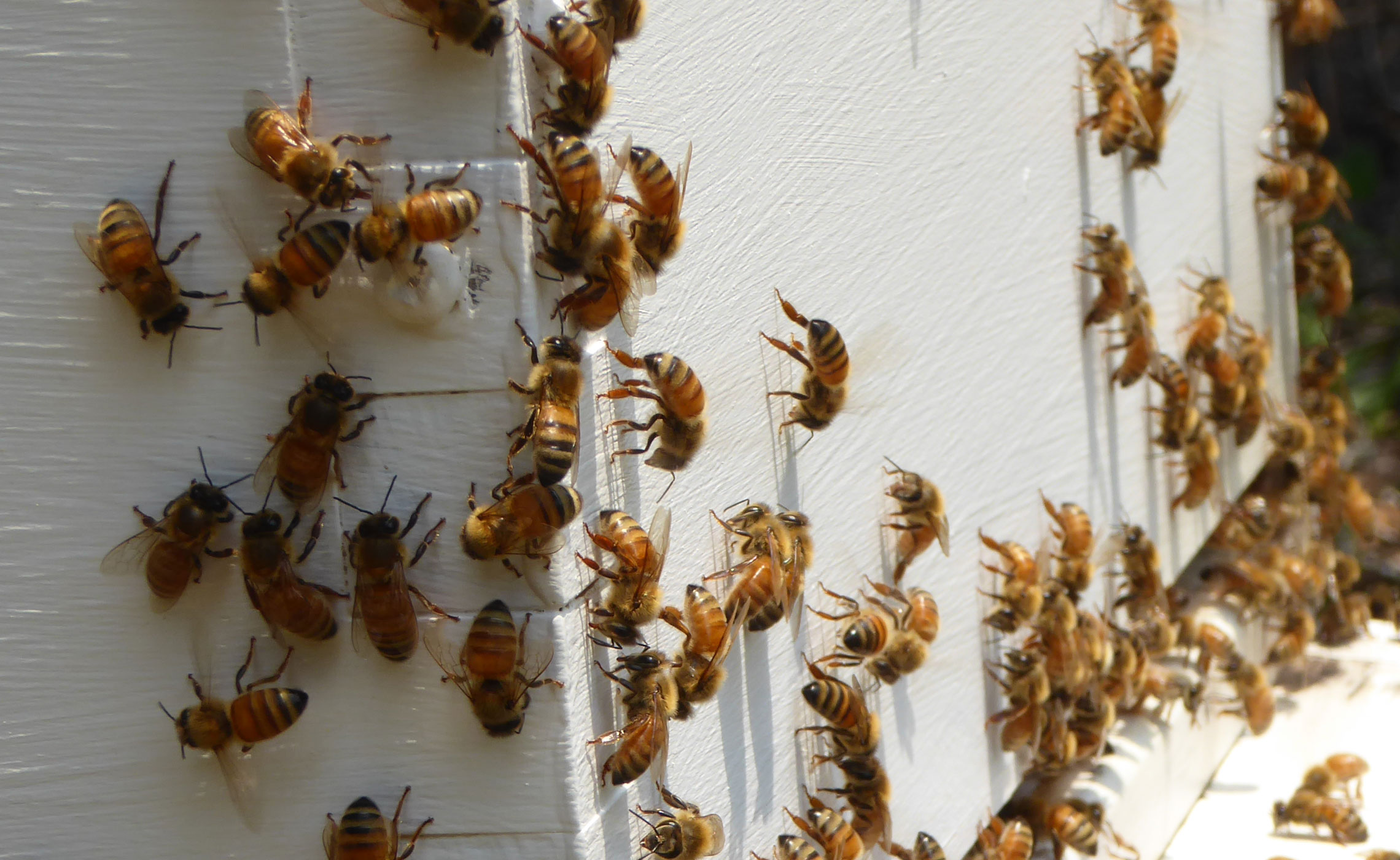 Close up of Julia's bees